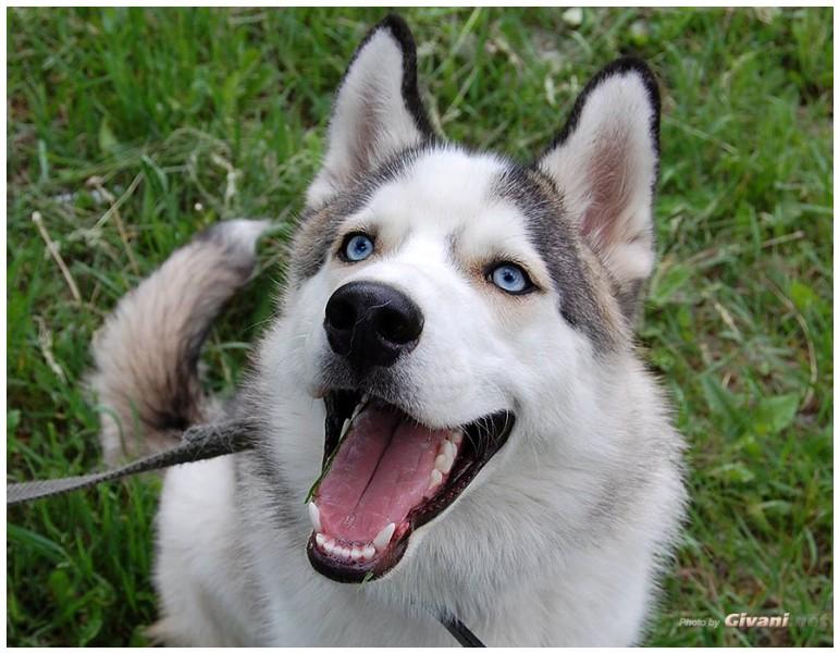 huskies 68 61 gliac win - 771×600